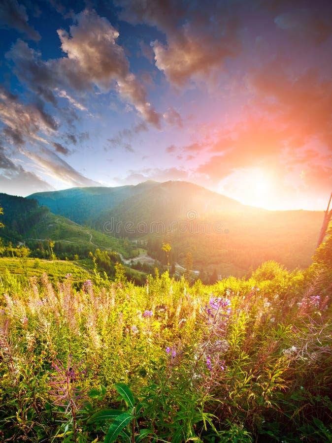 Ljus färgrik soluppgång över berg och blommafält arkivfoton