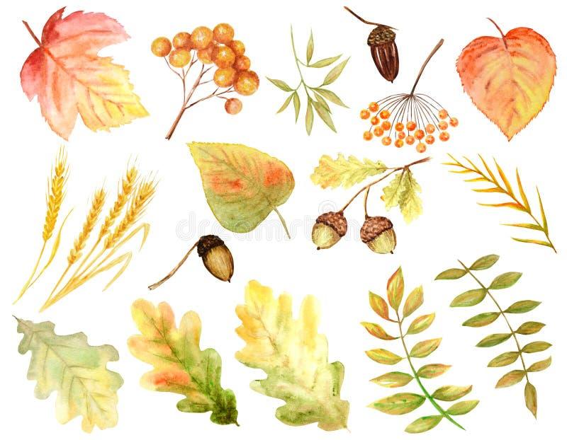 Ljus färguppsättning av vattenfärghöstsidor Lösa druvor, alm, lind, rönn, päron som isoleras på vit bakgrund royaltyfri foto