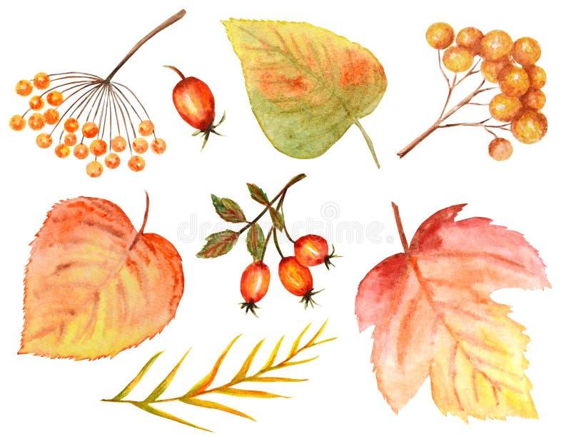 Ljus färguppsättning av vattenfärghöstsidor Lösa druvor, alm, lind, rönn, päron som isoleras på vit bakgrund arkivfoton