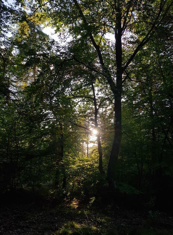Ljus i skog arkivbild