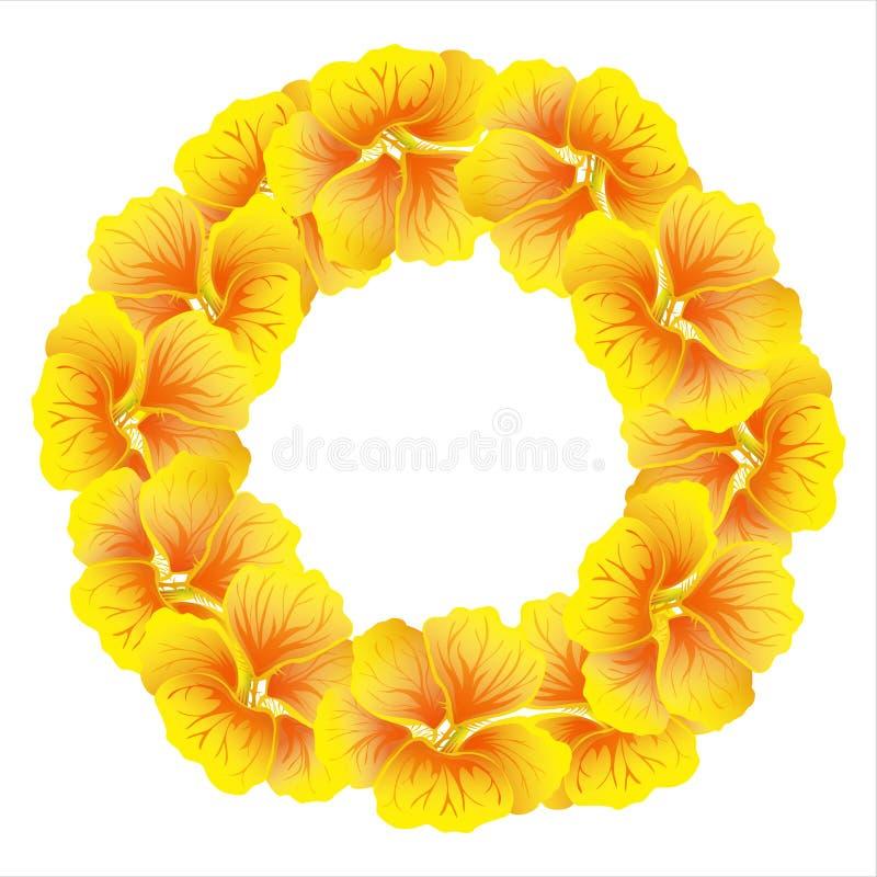 Ljus indiankrassekrans blommar wild yellow Härlig blom- cirkel som isoleras på vit bakgrund också vektor för coreldrawillustratio royaltyfri illustrationer