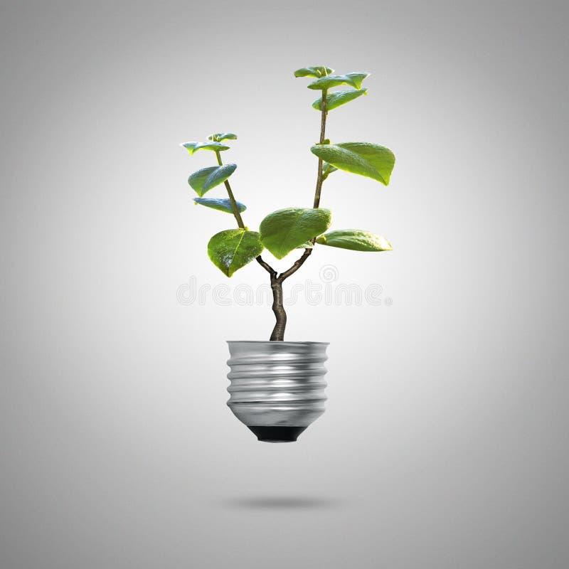 Ljus kula för grön energisymbolekologi royaltyfri bild