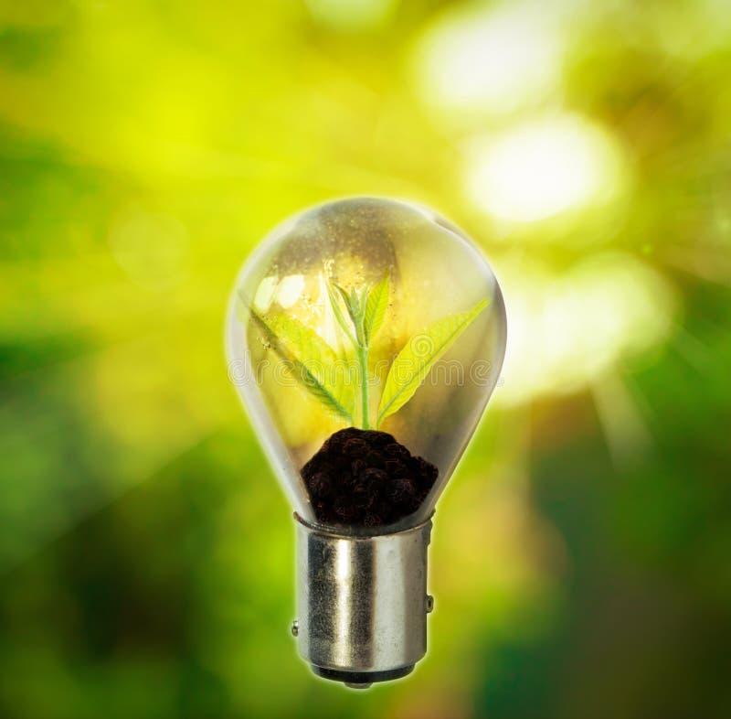 Ljus kula med den lilla växten som inom växer fotografering för bildbyråer