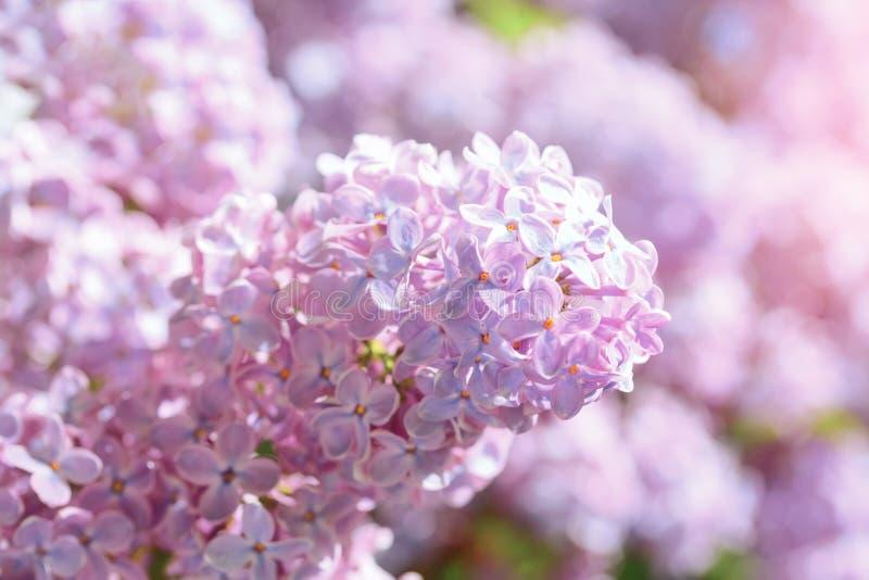 Ljus lila blom på bakgrund för blå himmel fotografering för bildbyråer