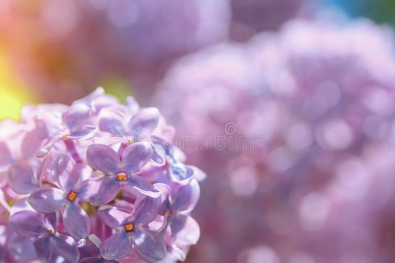 Ljus lila blom på bakgrund för blå himmel royaltyfri foto