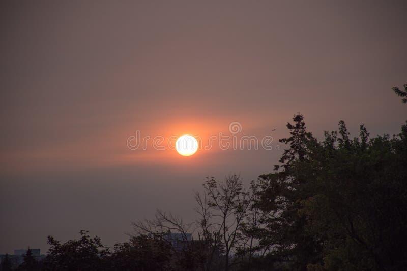 Ljus måne i aftonen över konturer av träd royaltyfri fotografi