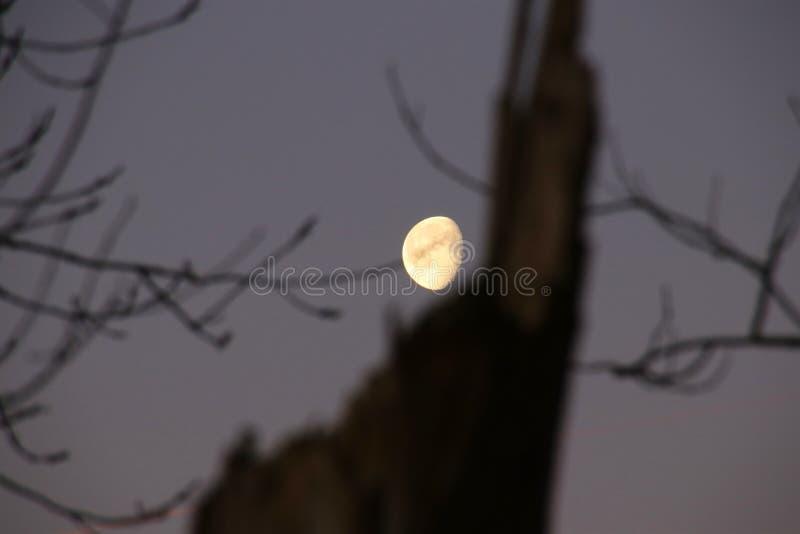 Ljus måneskulptur som så är älskvärd och arkivbild