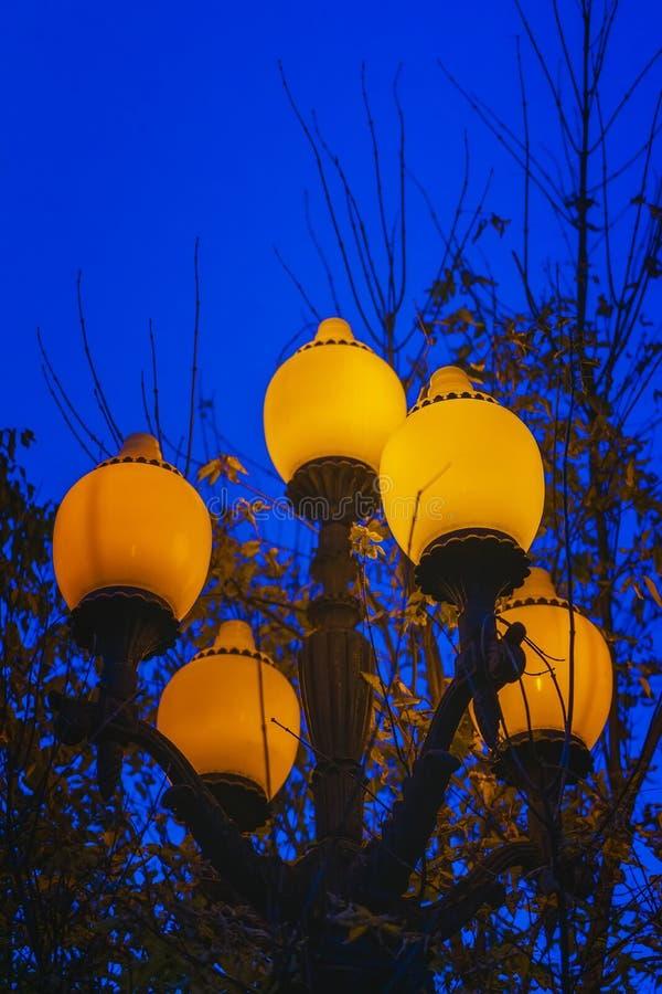 Ljus metallisk tänd lykta mot himmel och höstträden på en sen kall afton royaltyfri fotografi