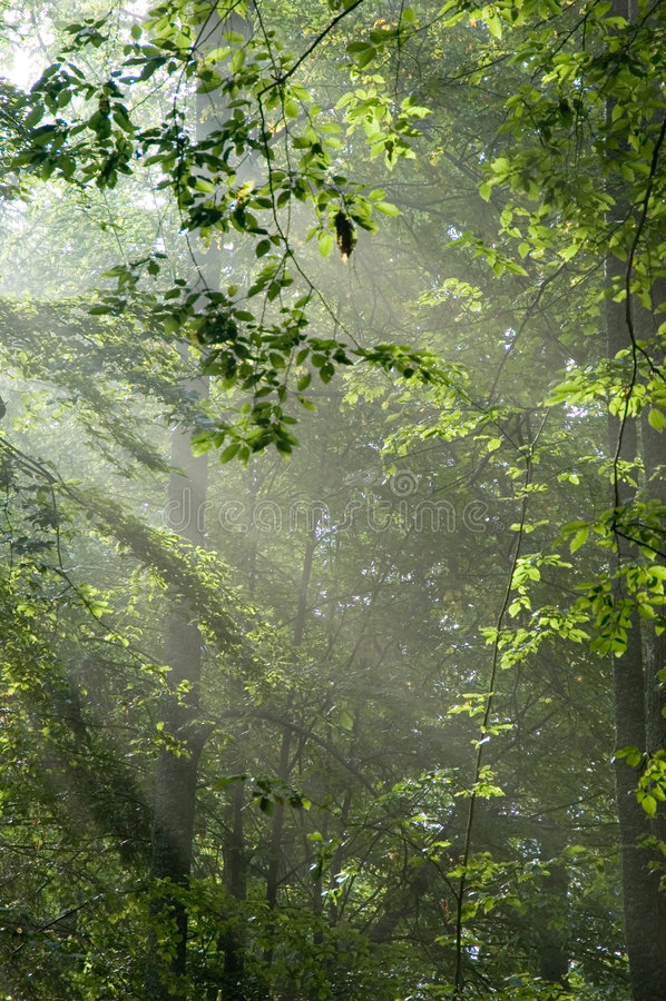 ljus morgon royaltyfri fotografi