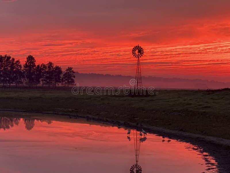 Ljus morgondimma, väderkvarn, damm med röd soluppgånghimmel i lantlig bygd royaltyfri bild