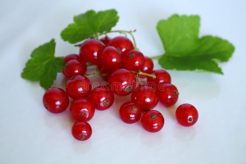 Ljus röd grupp av röda vinbär och aptitretande med dess gröna sidor på vit studiobakgrund fotografering för bildbyråer