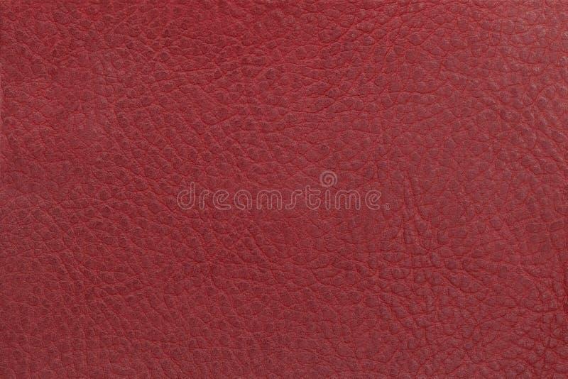 Ljus röd lädertexturbakgrund Bred vinkel Lens som täckas av det Lens locket i mitt arkivfoto