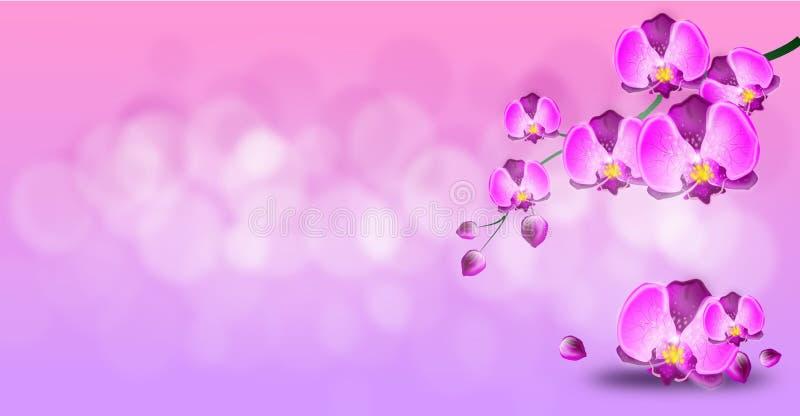 Ljus - rosa bakgrund med den purpurfärgade orkidén vektor illustrationer