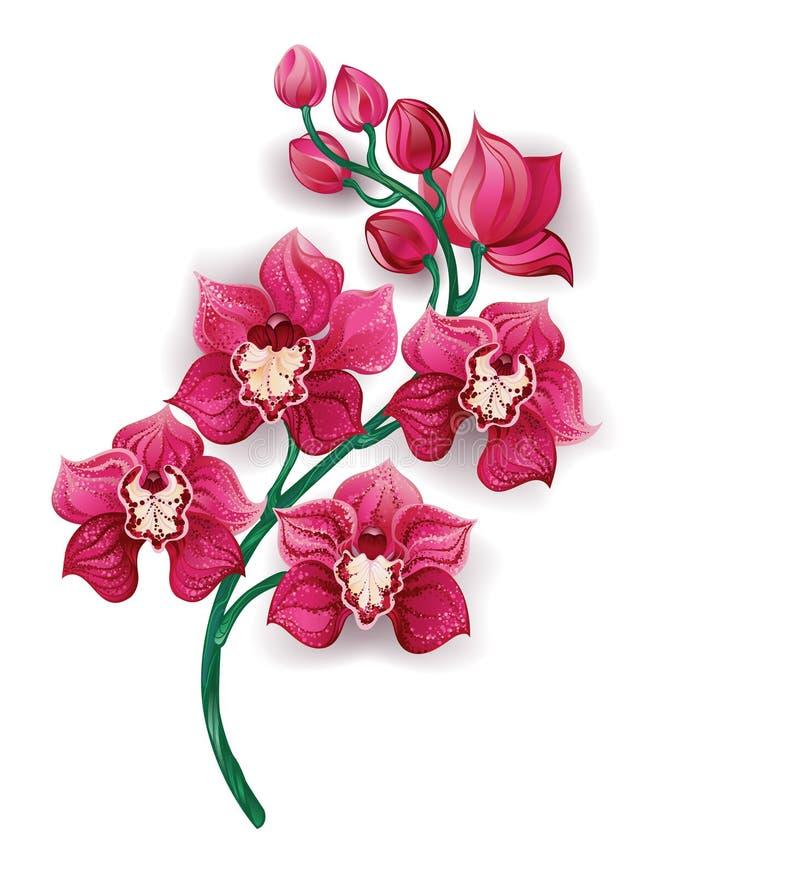 Ljus rosa orkidé royaltyfri illustrationer