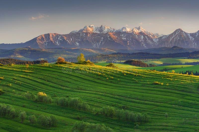Ljus rullande bygd i aftonljuset Pittoresk dag och ursnygg plats i vårtid Carpathian berg, Slovakien fotografering för bildbyråer