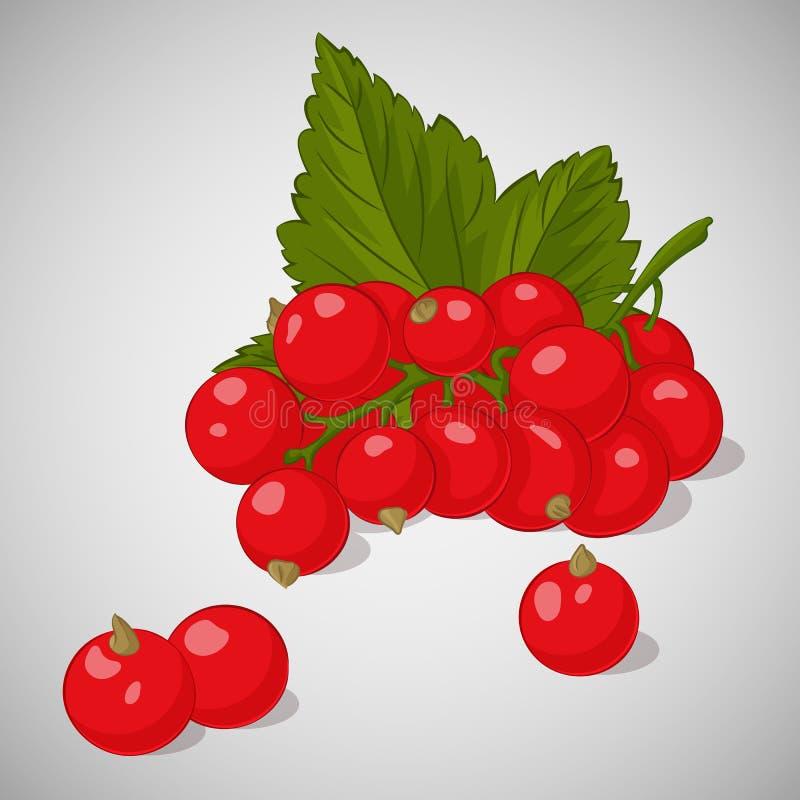 Ljus saftig röd vinbär på grå bakgrund Sött läckert för din design i tecknad filmstil också vektor för coreldrawillustration Bär  royaltyfri illustrationer