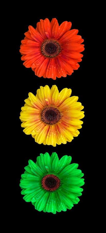 ljus signalering för blomma arkivfoton