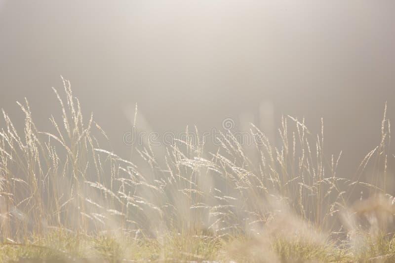 ljus slapp morgonnatur för bakgrund royaltyfri bild