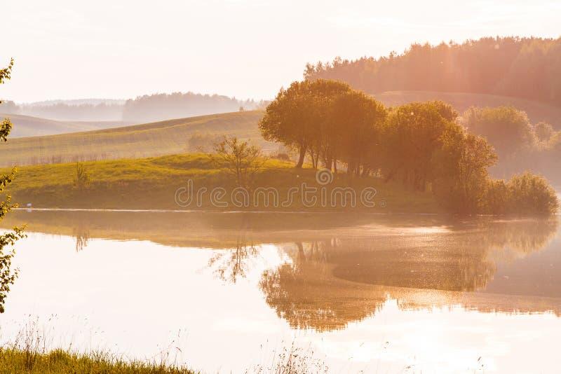 Ljus sol som skiner över bergigt landskap för grön skog royaltyfria foton