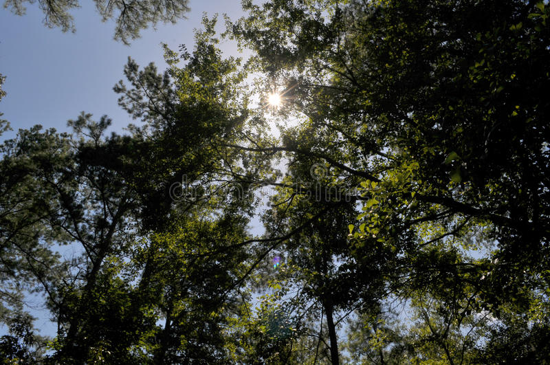 Ljus sol som skiner till och med träden royaltyfri bild