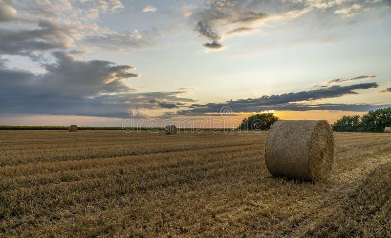 Ljus solnedgång över ett slutta vetefält med stora rullar av sugrör royaltyfria foton