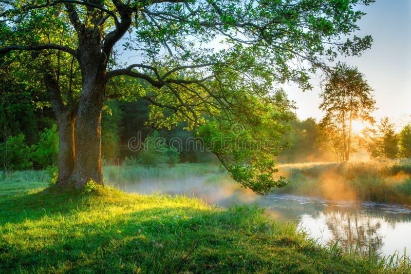 Ljus sommarmorgon vid flodstranden arkivfoto
