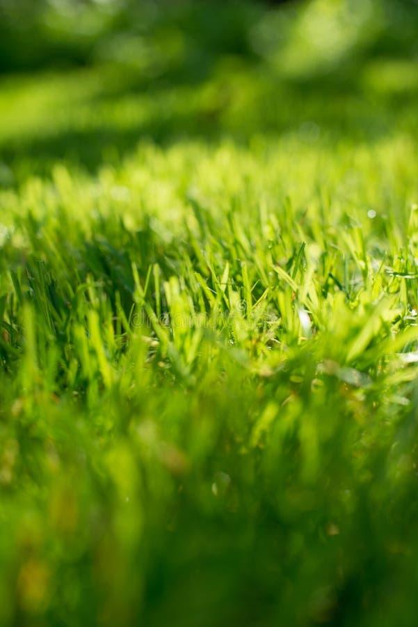 ljus sun under naturliga abstrakt bakgrunder Nytt grönt vårgräs på gräsmattan med den suddiga bokehen för selektiv fokus arkivbild