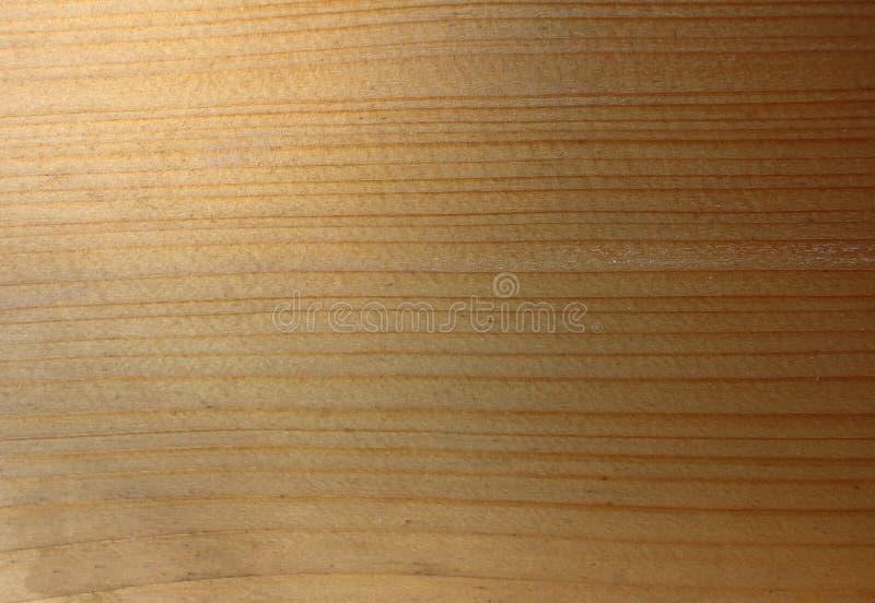 Ljus textur med den naturliga trämodellen arkivfoton