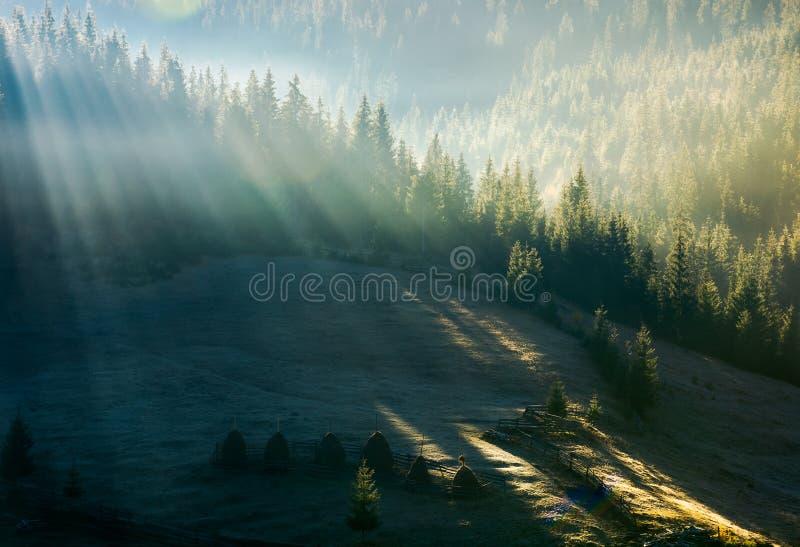 Ljus till och med dimma i skog på kullen arkivfoto