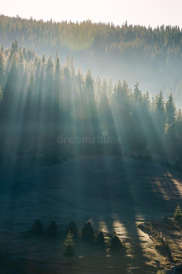 Ljus till och med dimma i skog på kullen royaltyfri bild
