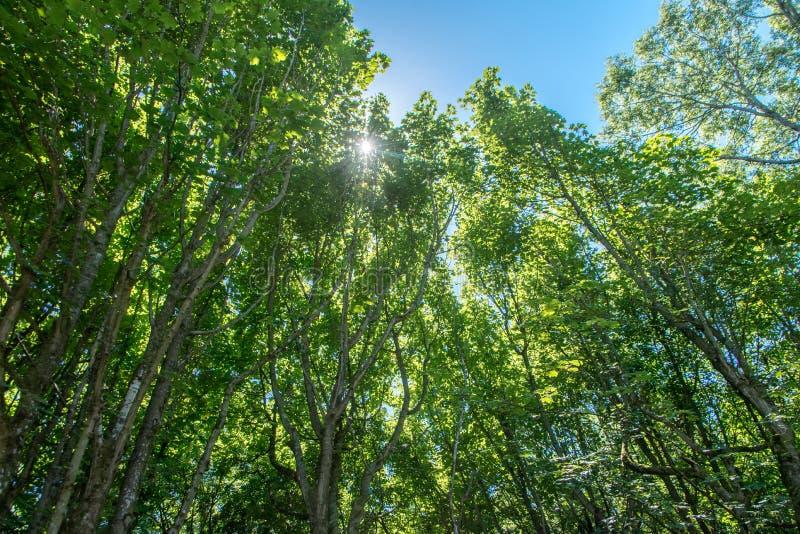Ljus till och med skogen royaltyfri fotografi