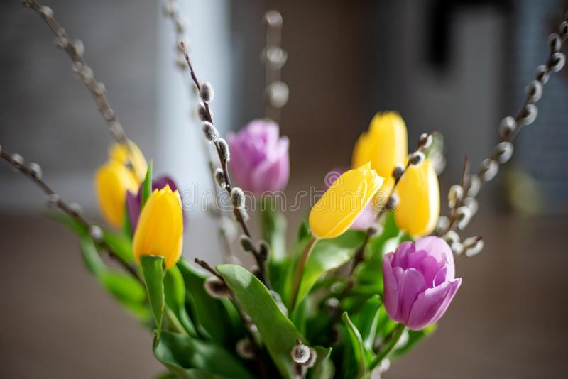 Ljus vårbukett av gula och purpurfärgade tulpan och filialpussypilar Påskordning av nya blommor royaltyfria bilder