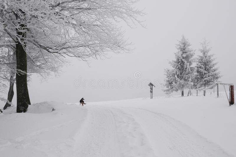 Ljus vinterdag i bergen fotografering för bildbyråer