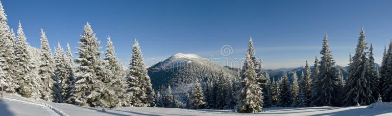 Ljus vinterdag i bergen arkivbild