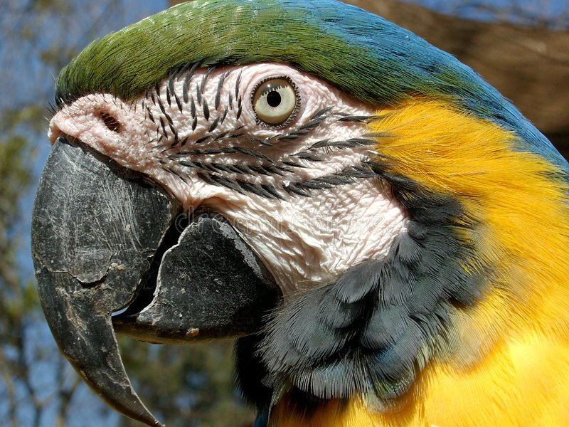 Download Ljusa ögon arkivfoto. Bild av skog, fluga, macaw, tugga - 26920
