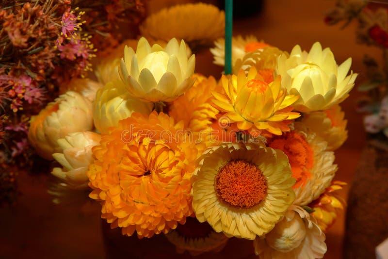 Ljusa australiensiska infödda blommor arkivfoton