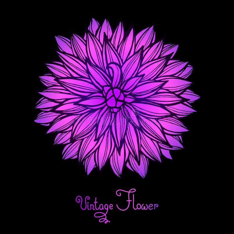 Ljusa Dahlia Flower Isolated för design royaltyfri illustrationer