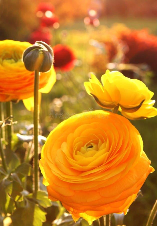 ljusa färgrika blommor royaltyfria bilder