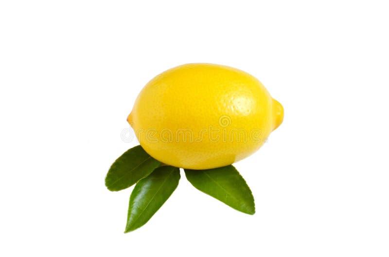 Ljusa gula citron och citronsidor på vit bakgrund fotografering för bildbyråer