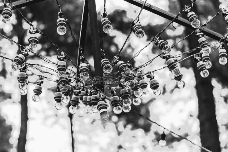 Ljusa kulor som hänger i öppningen på pinjeskogen arkivbilder