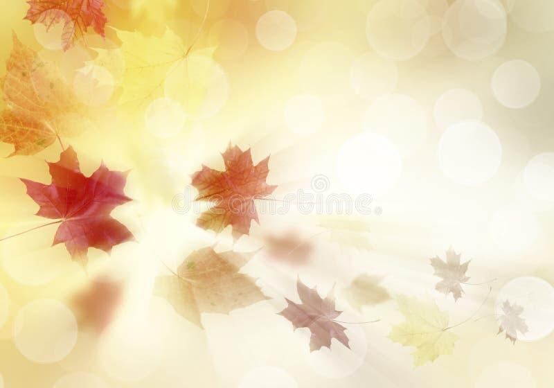 ljusa leaves för höst vektor illustrationer