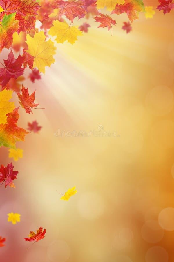 ljusa leaves för höst stock illustrationer