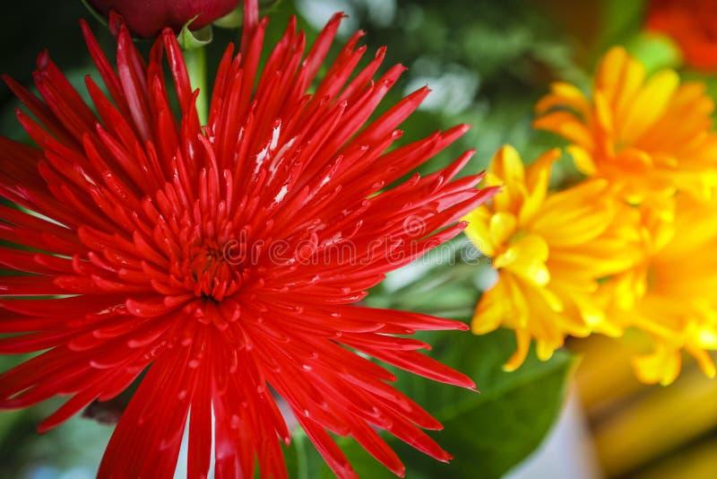 Ljusa och färgrika blommor fotografering för bildbyråer
