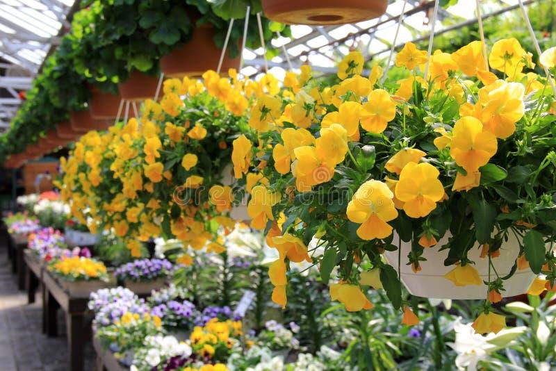 Ljusa och färgrika säsongsbetonade blommor och lägenheter fotografering för bildbyråer