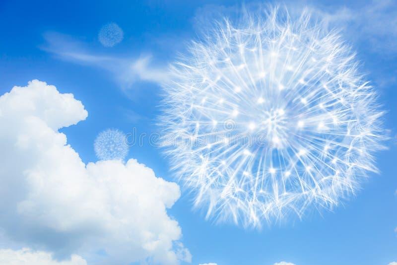 Ljusa och luftiga maskrosor på en blå bakgrund med moln Blowballs som ett symbol av lightness, låg-kalori mat, lopp fotografering för bildbyråer