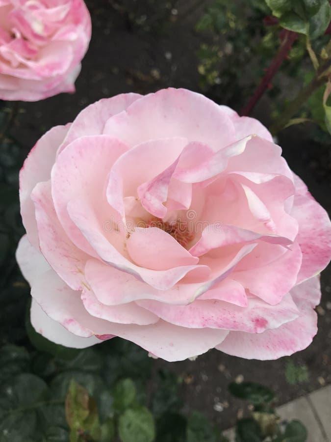 Ljusa och vibrerande blommor royaltyfria bilder
