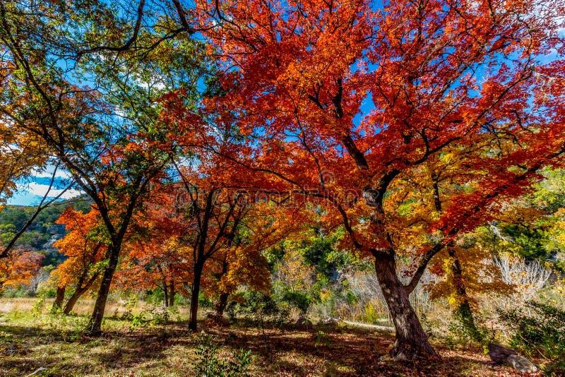 Ljusa orange nedgångsidor av borttappade lönnar delstatspark, Texas royaltyfri bild