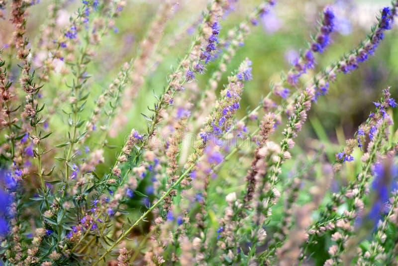 Ljusa purpurfärgade lösa blommor i mjuk fokus och med härlig boke royaltyfri foto