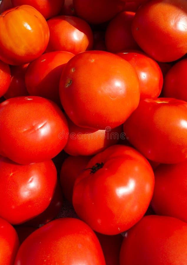 Ljusa röda Florida tomater på en frukt- och grönsakställning på bönder för en lördag morgon marknadsför royaltyfri foto