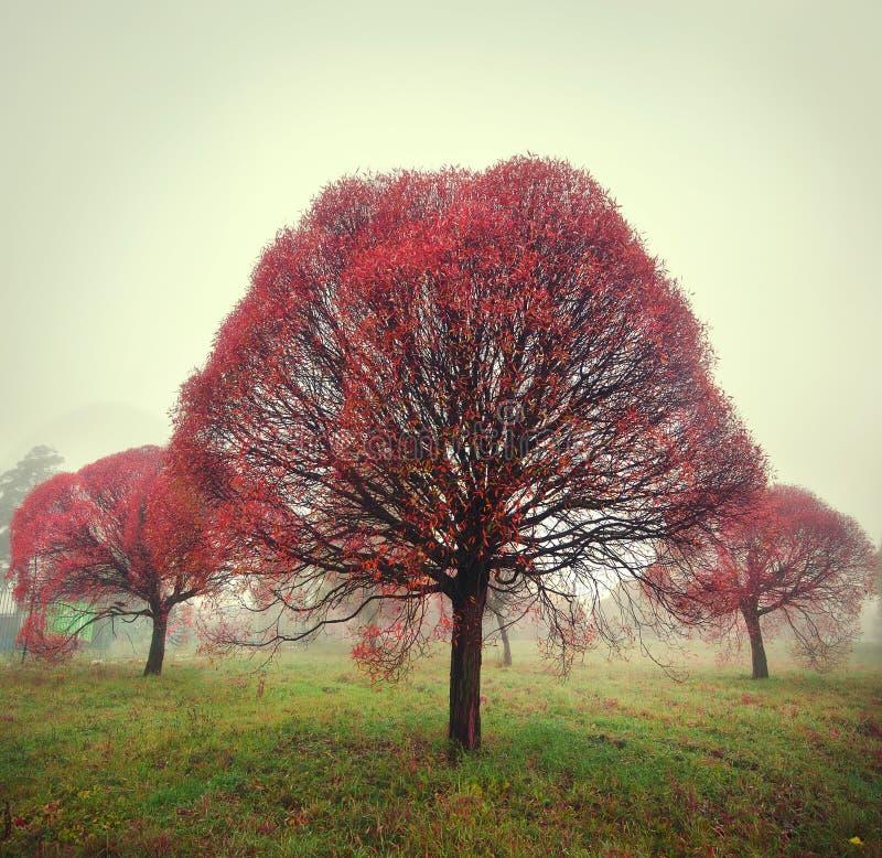 Ljusa röda treestativ i dimman i höst arkivfoto